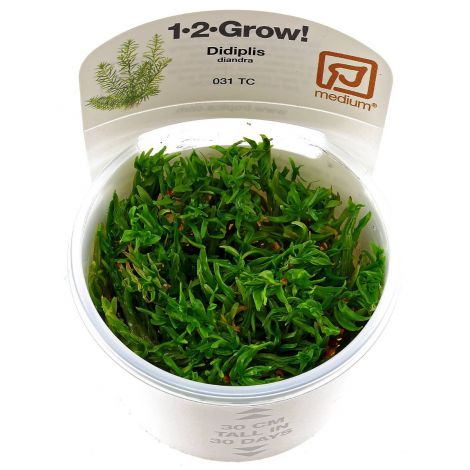 EASY GROW DIDIPLIS DIANDRA NR 1