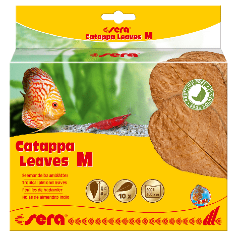 sera catappa leaves m 18 cm